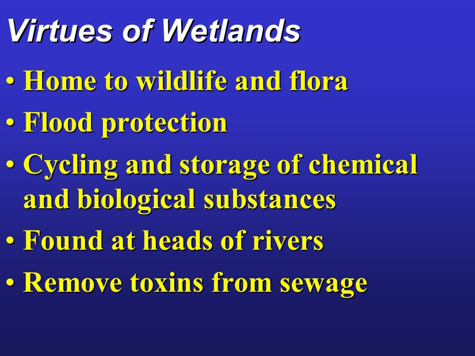 Virtues of Wetlands Home to wildlife and flora Flood protection