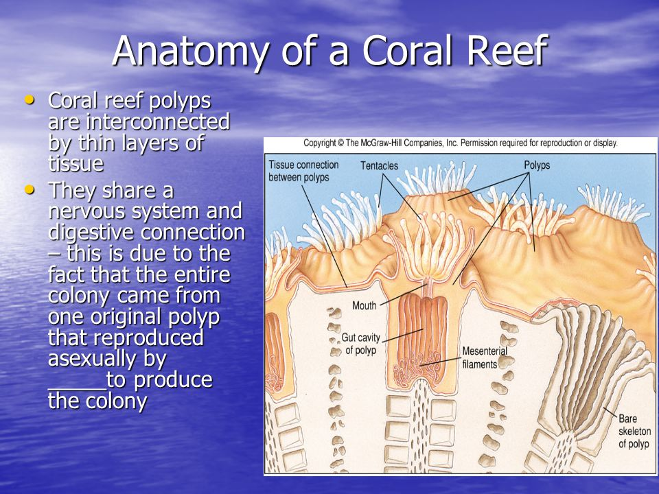 Chapter 14 Coral Reefs Ppt Video Online Download