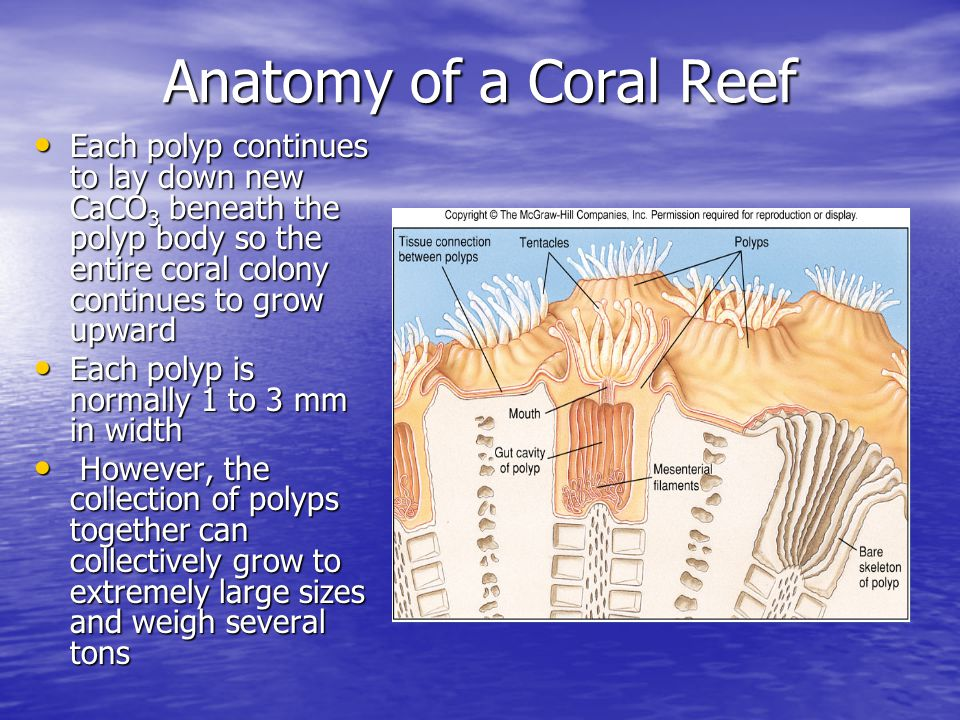 Chapter 14 Coral Reefs. - ppt video online download