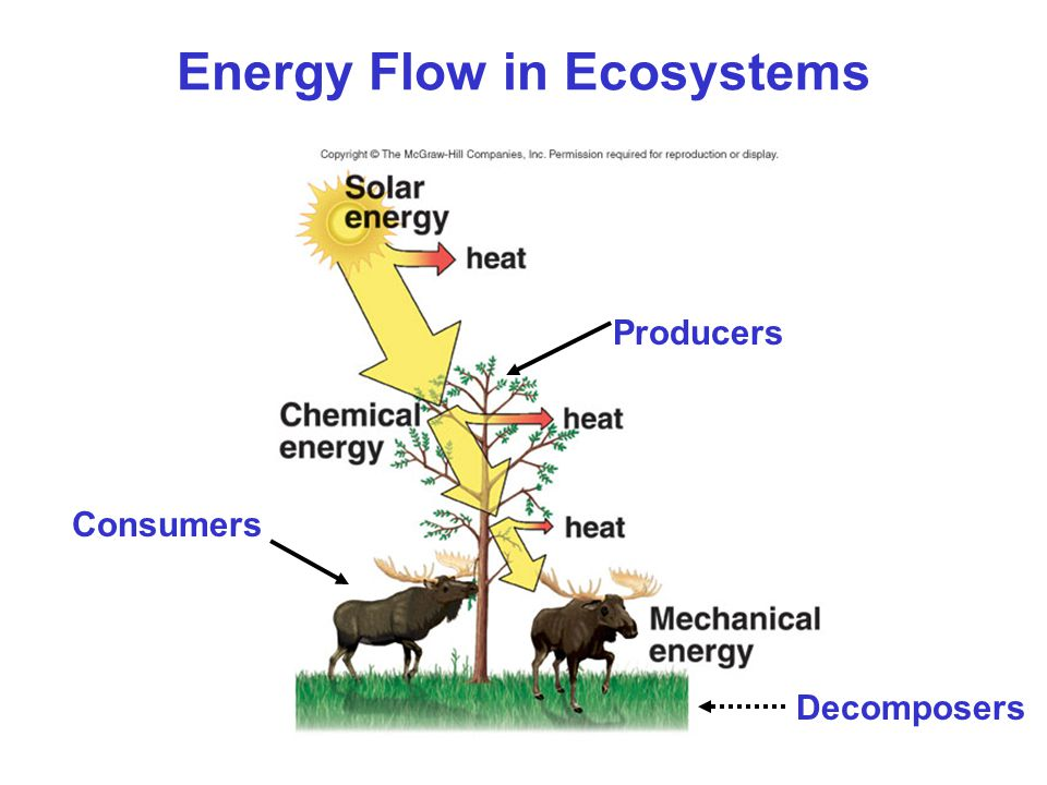 imbalance in ecosystem causes Ecological imbalance: its causes and effects in the biosphere disruption of ecological balance are caused by careless human activities which interfere the natural cycle of the ecosystem you will find out here the ecological factors that disrupt ecosystem.