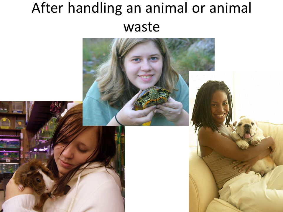 After handling an animal or animal waste