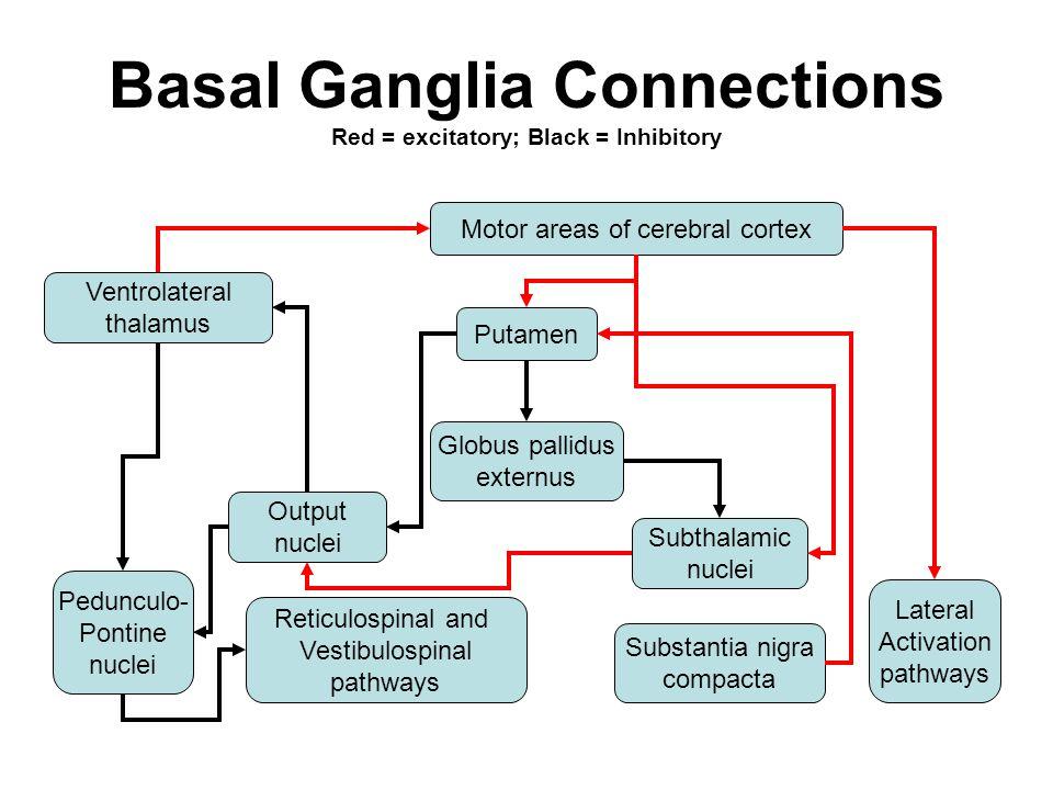 basal nuclei  basal ganglia