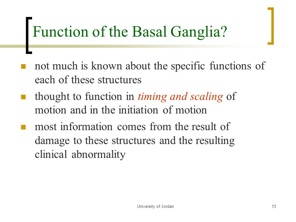 Function of the Basal Ganglia