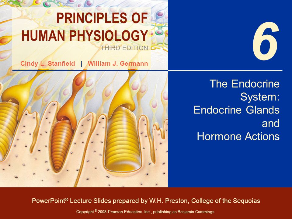 The Endocrine System Endocrine Glands And Hormone Actions Ppt