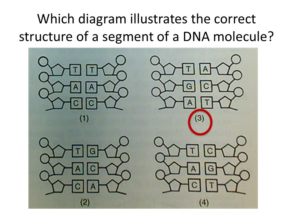 Dna Structure And Replication Ppt Video Online Download