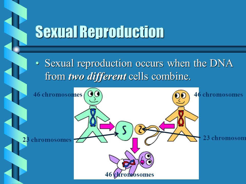 Sexual reproduction and meiosis notes