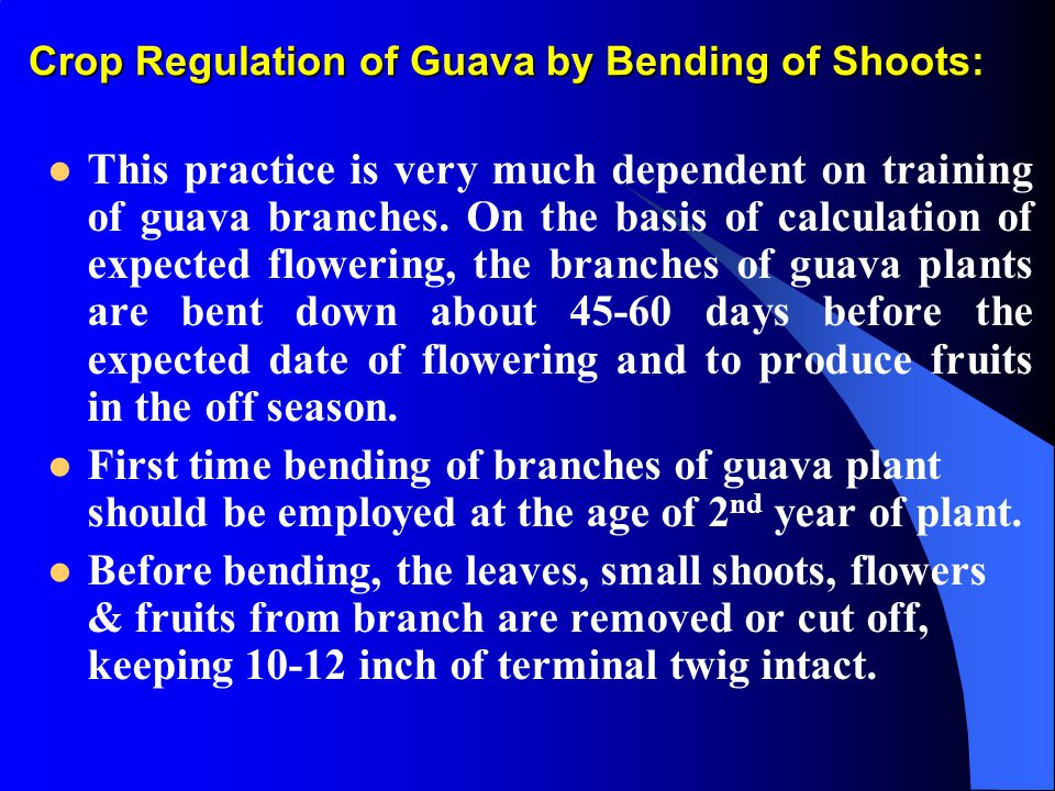Guava cultivation ppt