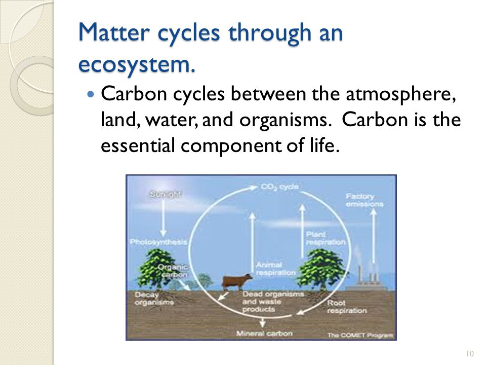 Matter cycles through an ecosystem.