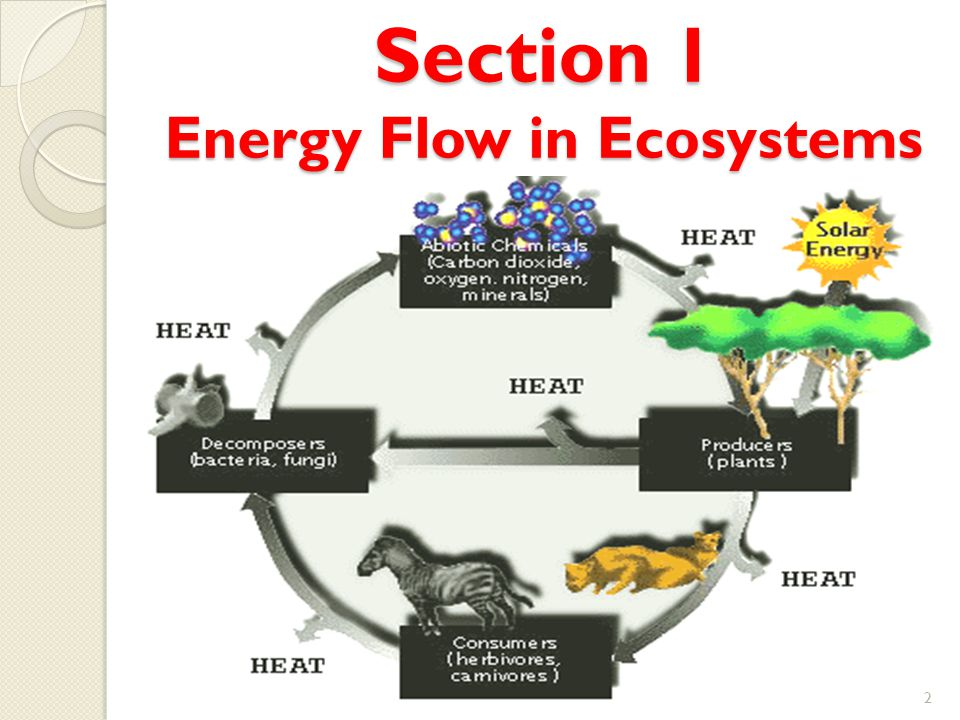 Section 1 Energy Flow in Ecosystems
