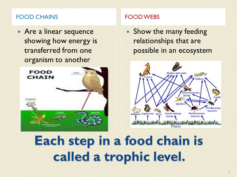 Each step in a food chain is called a trophic level.