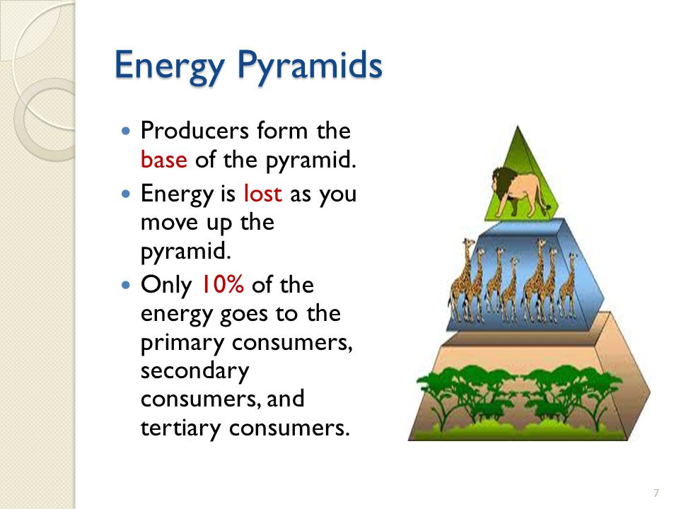 Energy Pyramids Producers form the base of the pyramid.