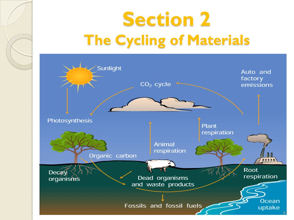 Section 2 The Cycling of Materials