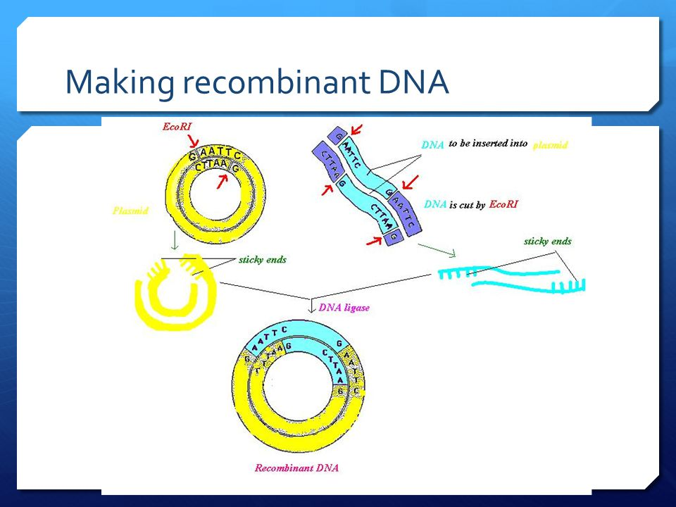 Can You Correctly Place The Labels In This Diagram That Summarizes The Process Of Dna Profiling.Biotechnology Ch Ppt Video Online Download