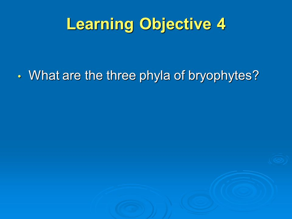 Learning Objective 4 What are the three phyla of bryophytes