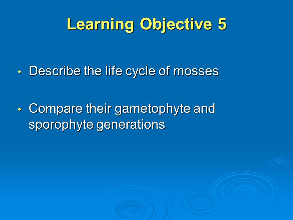 Learning Objective 5 Describe the life cycle of mosses