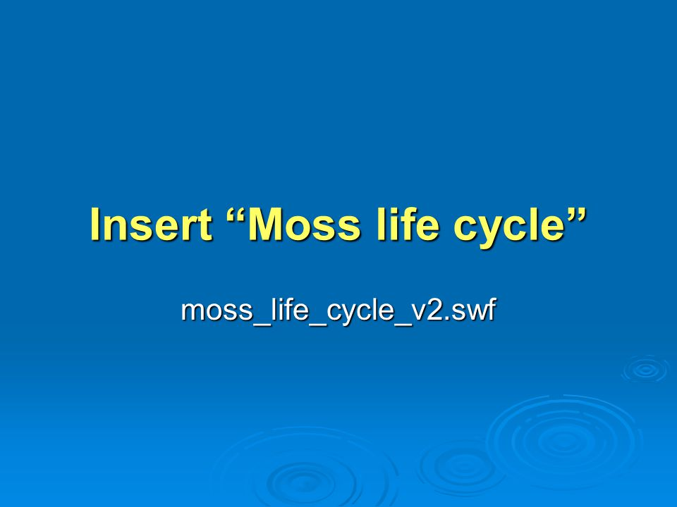 Insert Moss life cycle