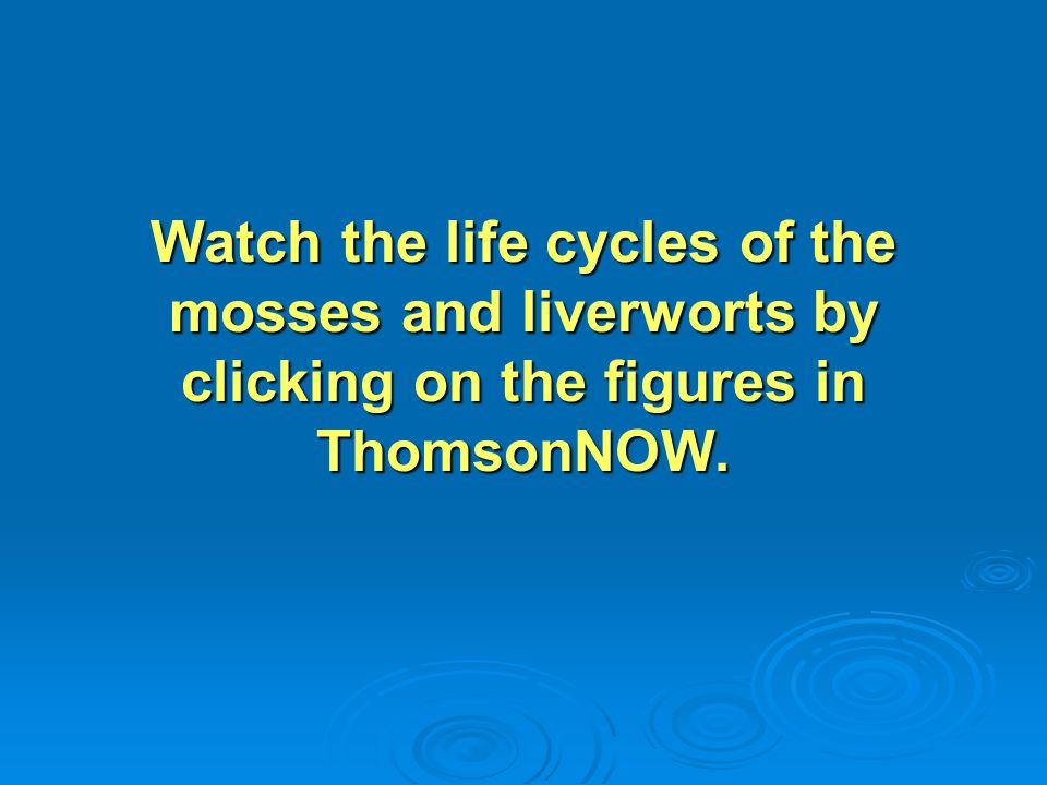 Watch the life cycles of the mosses and liverworts by clicking on the figures in ThomsonNOW.
