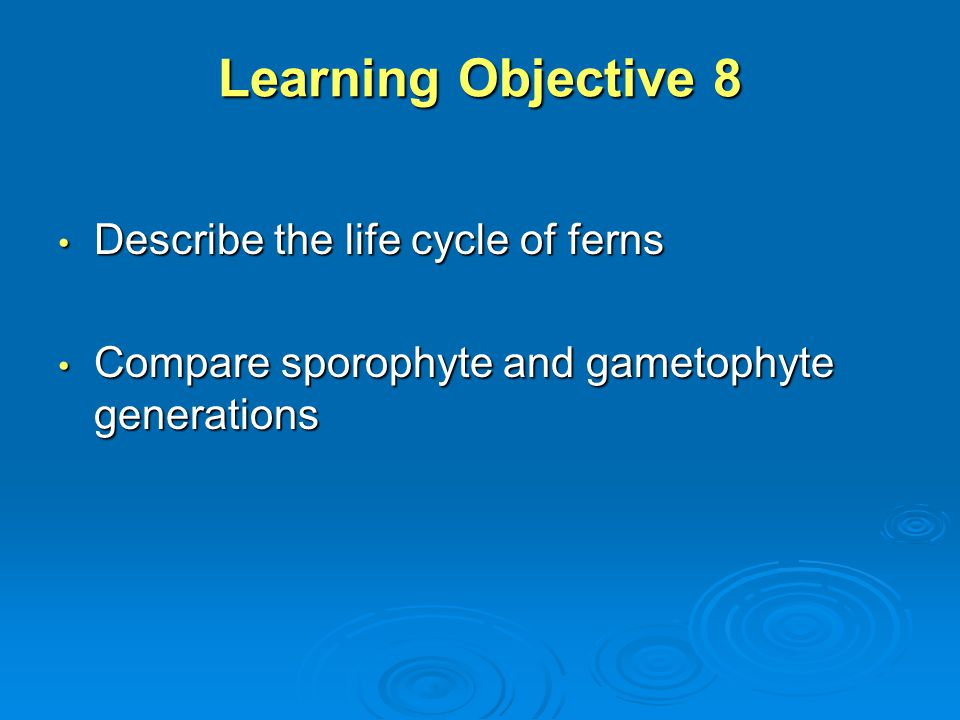 Learning Objective 8 Describe the life cycle of ferns