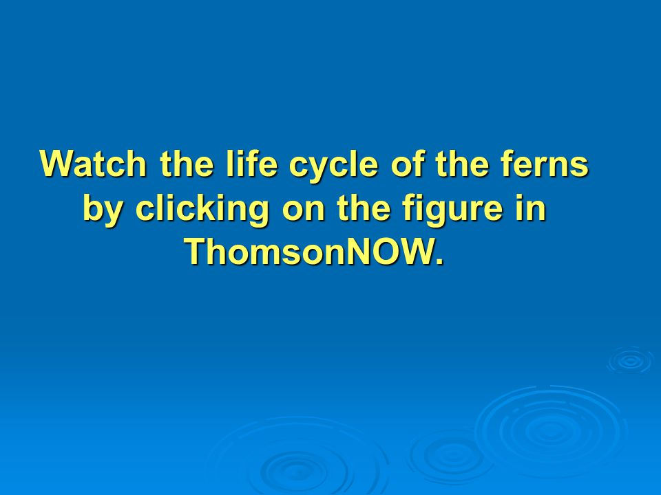 Watch the life cycle of the ferns by clicking on the figure in ThomsonNOW.