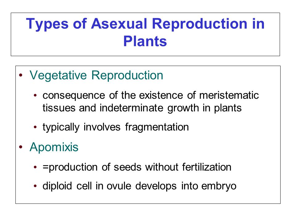 Apomixis vs asexual reproduction worksheet