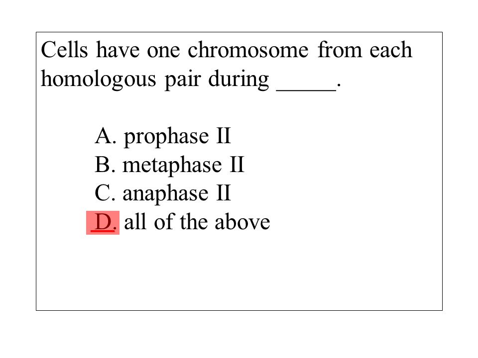 independent assortment of chromosomes occurs during _____