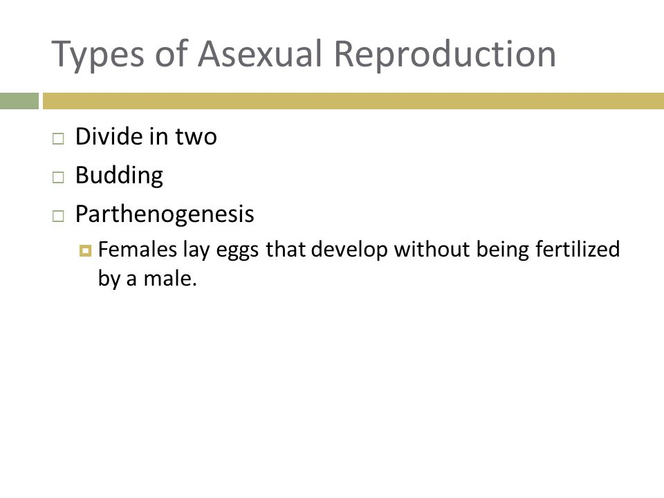 Chordata asexual reproduction worksheets