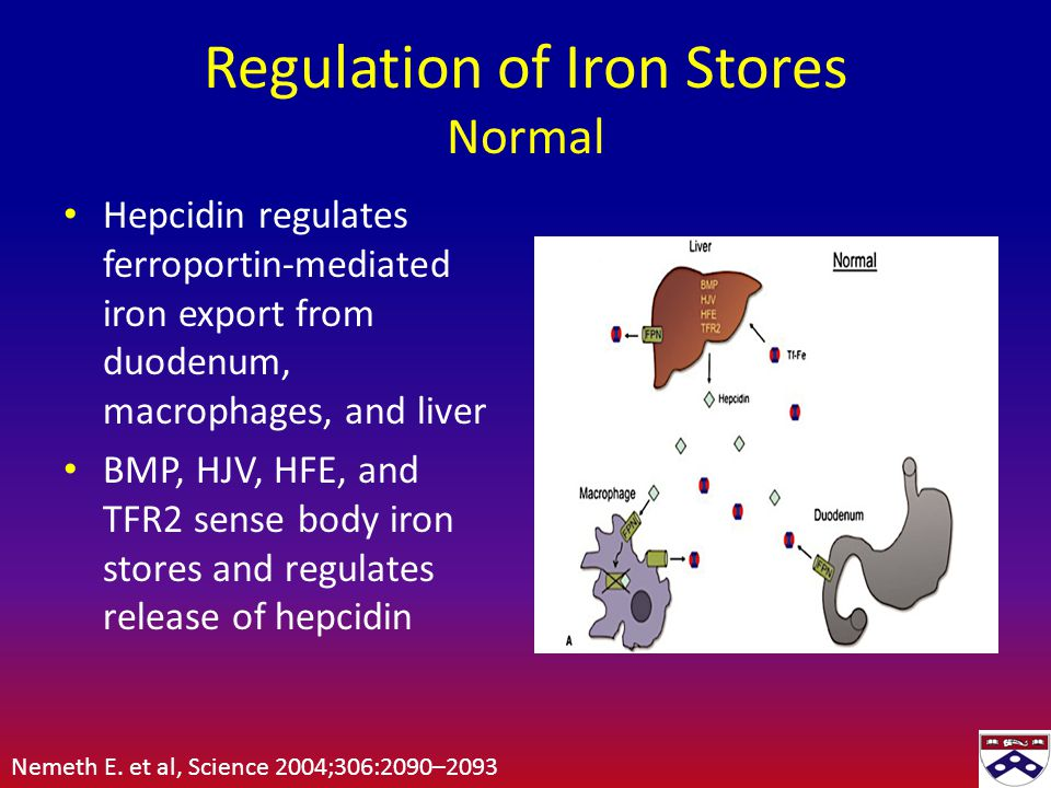 Regulation of Iron Stores Normal