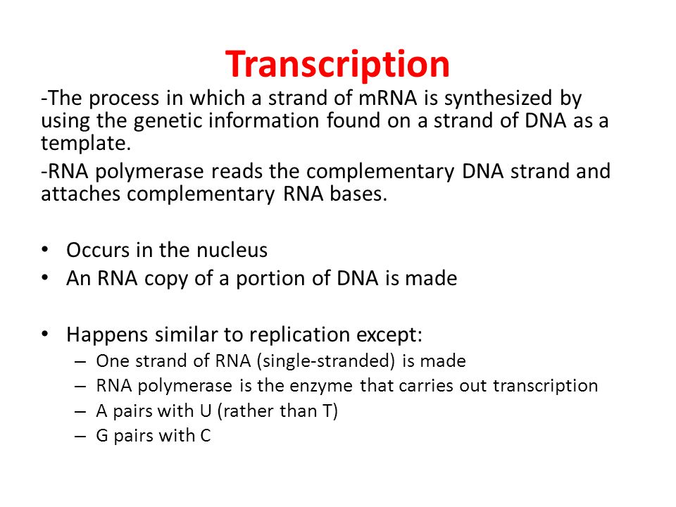 Transcription -The process in which a strand of mRNA is synthesized by using the genetic information found on a strand of DNA as a template.