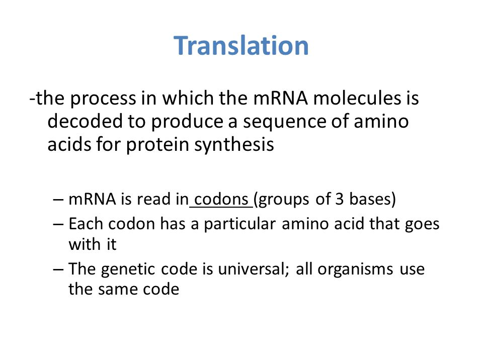 Translation -the process in which the mRNA molecules is decoded to produce a sequence of amino acids for protein synthesis.