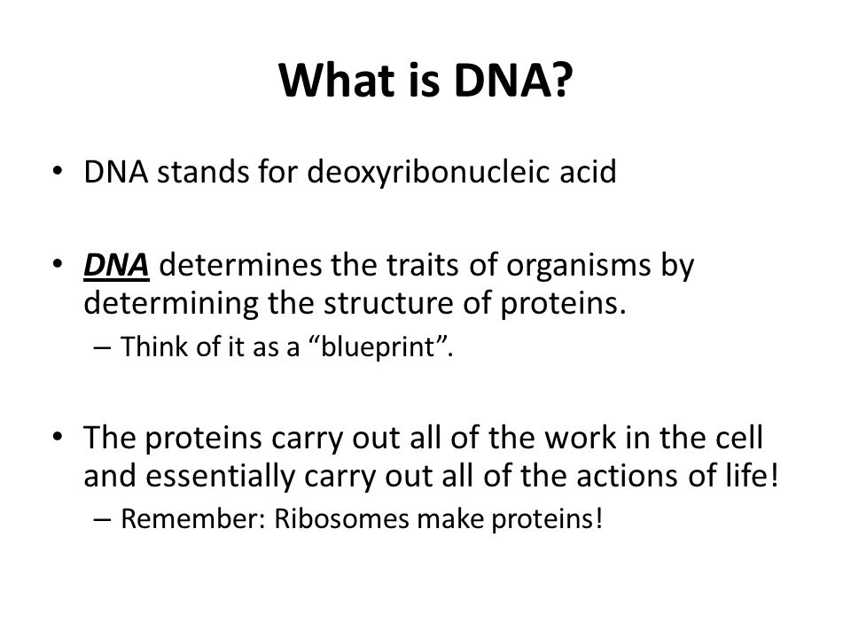 What is DNA DNA stands for deoxyribonucleic acid