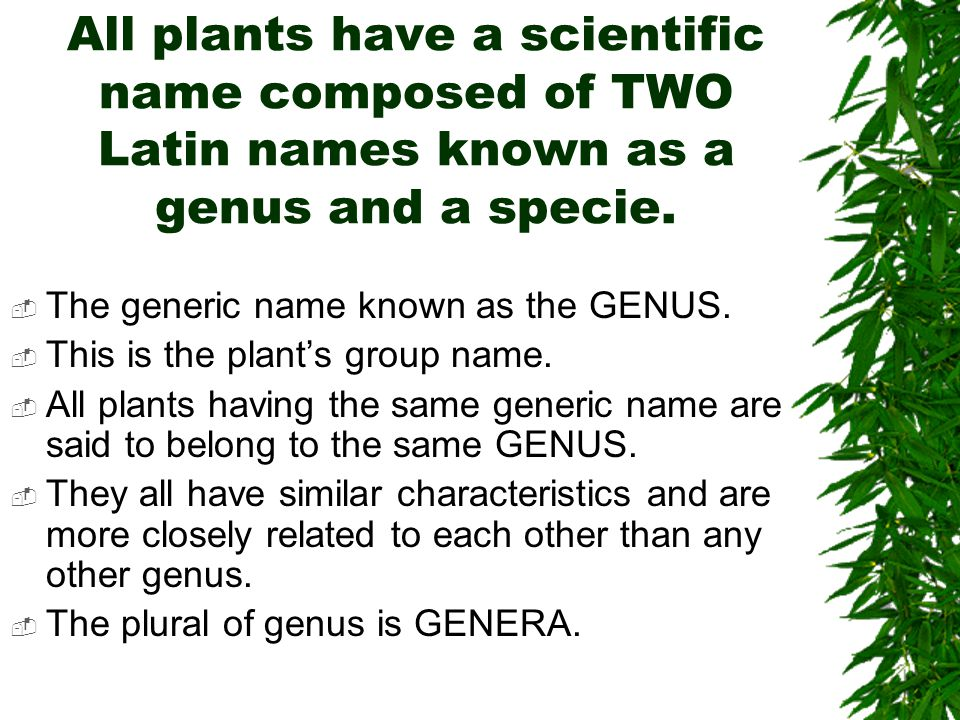 Plant Taxonomy How Plants Are Named Ppt Video Online Download
