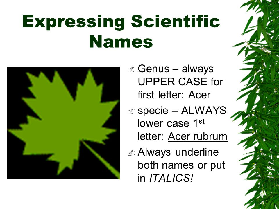 the first letter of every genus name is the letter of every genus name is naming phasmids a 10090 | Expressing Scientific Names