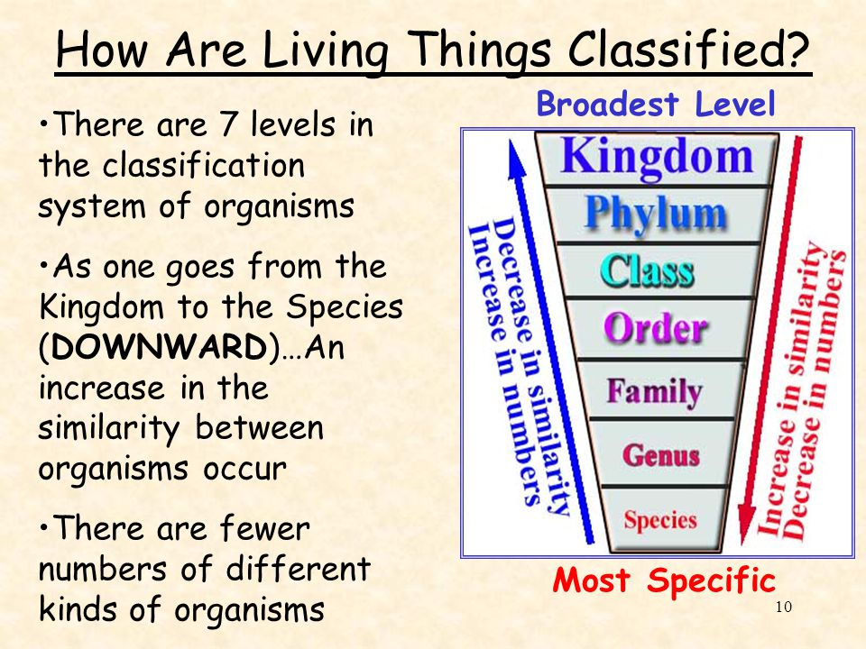 How Are Living Things Classified