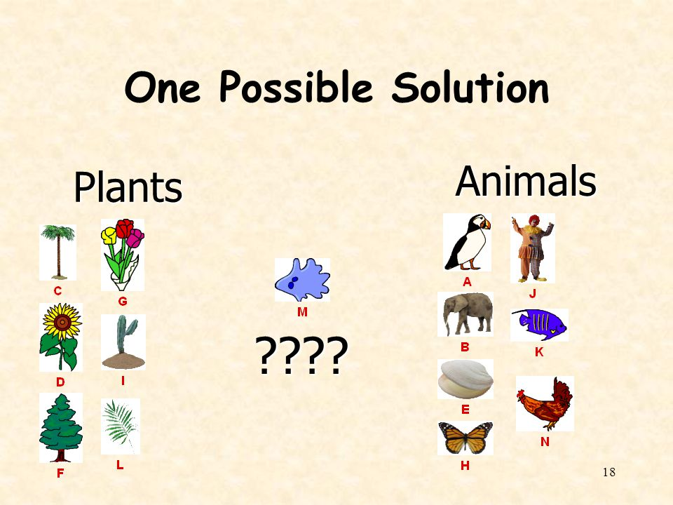 One Possible Solution Animals Plants