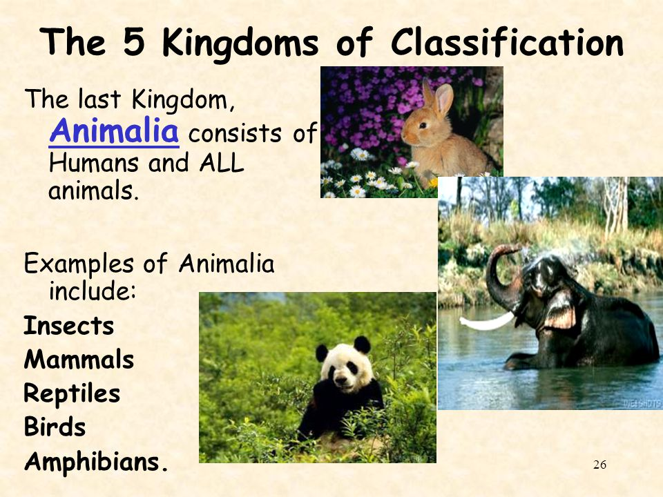 The 5 Kingdoms of Classification