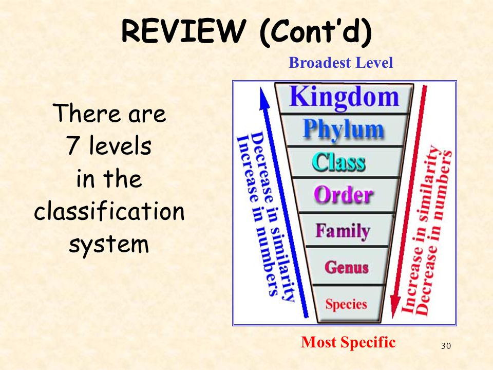 REVIEW (Cont'd) There are 7 levels in the classification system
