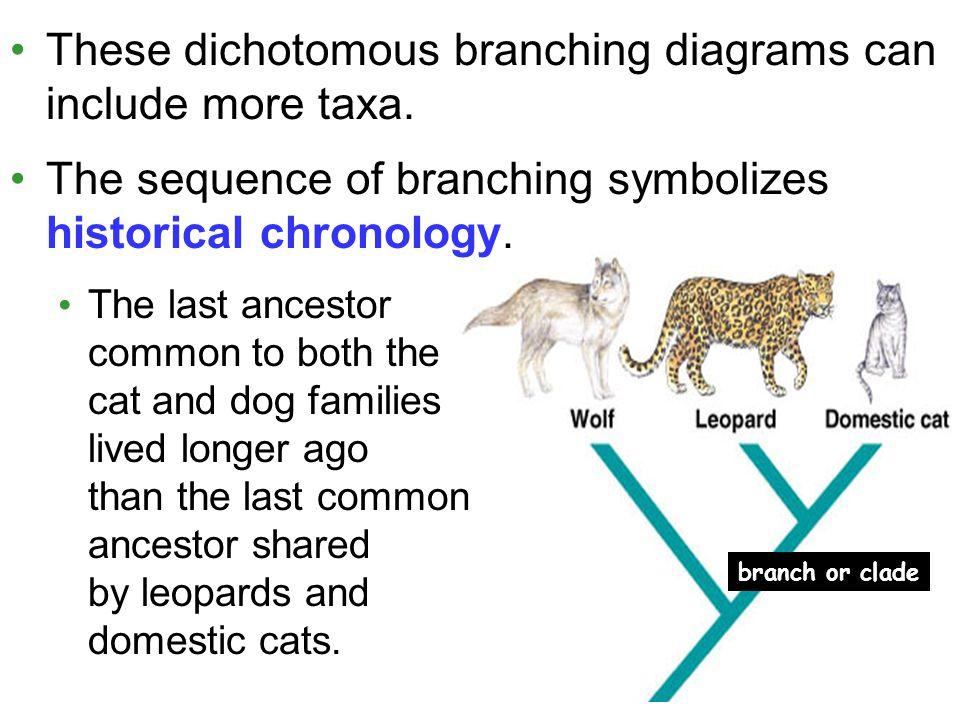 Branching Diagram Dog Circuit Wiring And Diagram Hub