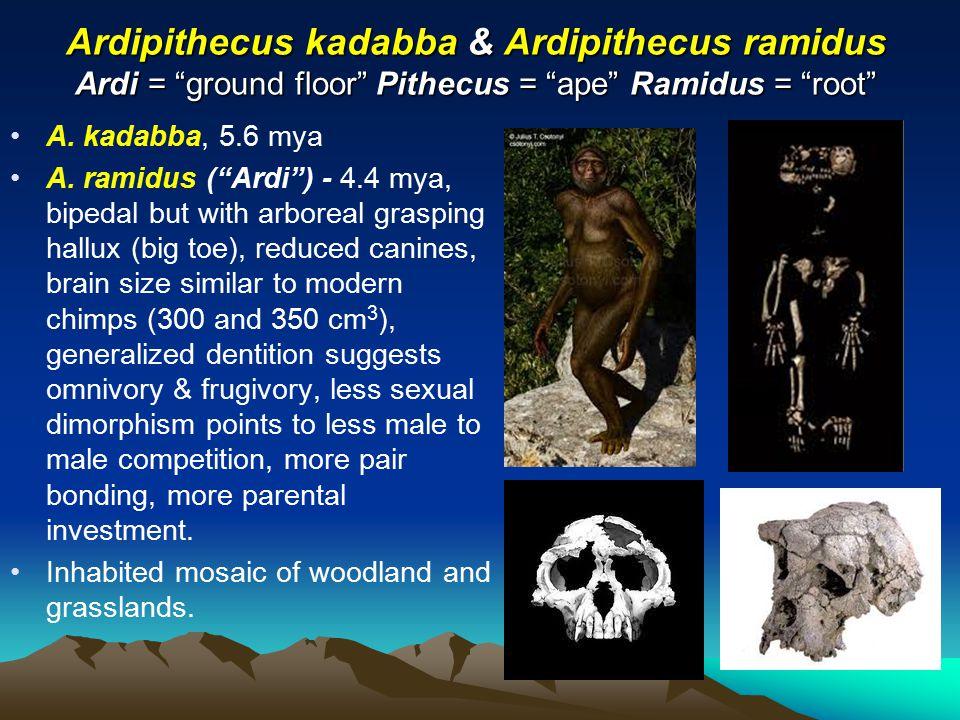 ardipithecus ramidus kadabba