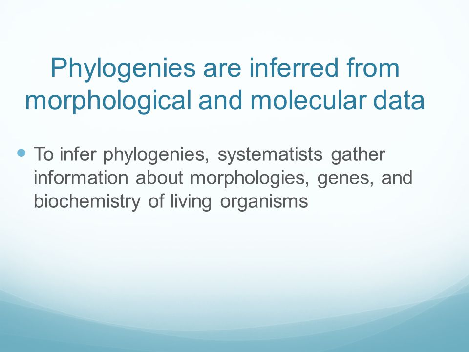 Phylogenies are inferred from morphological and molecular data