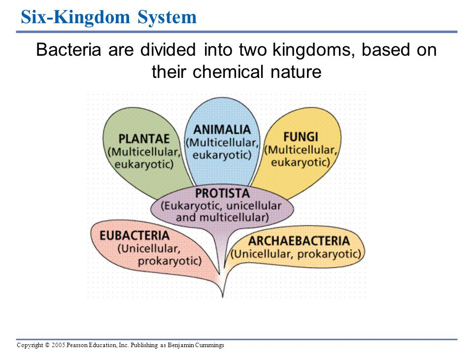 Bacteria are divided into two kingdoms, based on their chemical nature