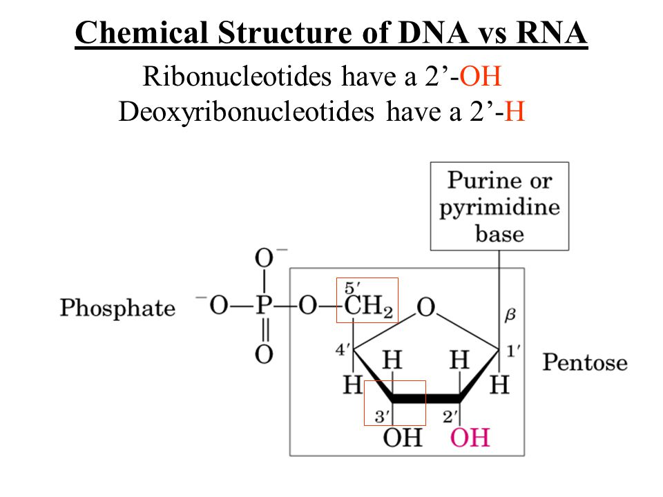 Nucleic acids dna and rna are nucleic acids long thread like 2 chemical structure ccuart Image collections