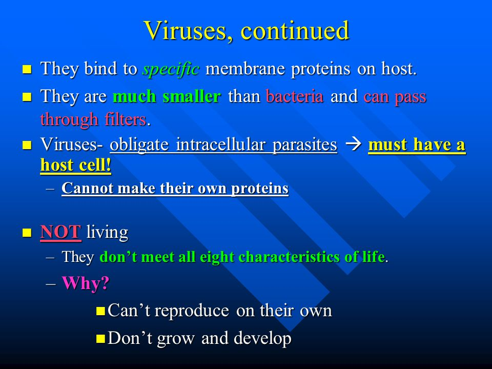 Viruses, continued They bind to specific membrane proteins on host.
