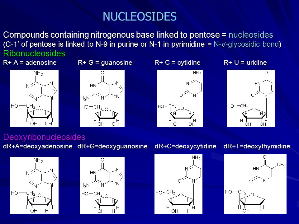 which biomolecule contains nitrogenous bases