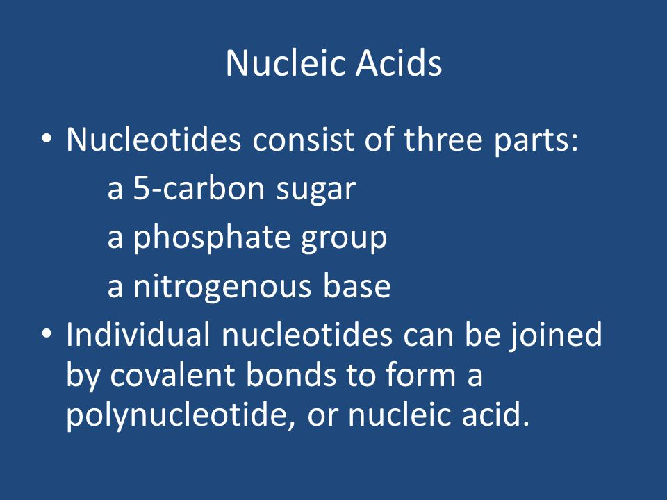 Nucleic Acids Nucleotides consist of three parts: a 5-carbon sugar