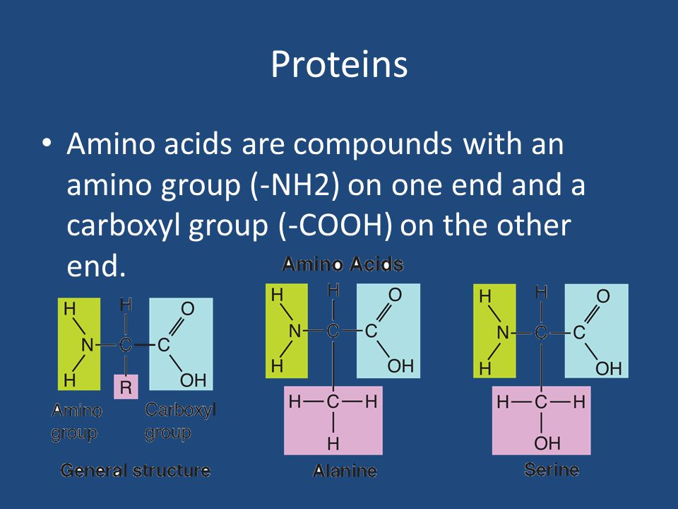 Proteins Amino acids are compounds with an amino group (-NH2) on one end and a carboxyl group (-COOH) on the other end.