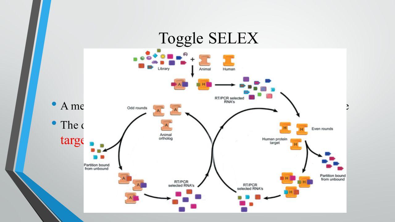 In the name of God Aptamer in-vitro selection SELEX & Non-SELEX