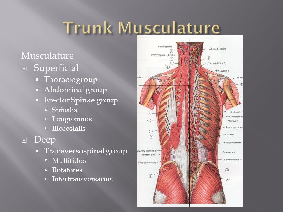 evaluation of low back pain ppt video online download