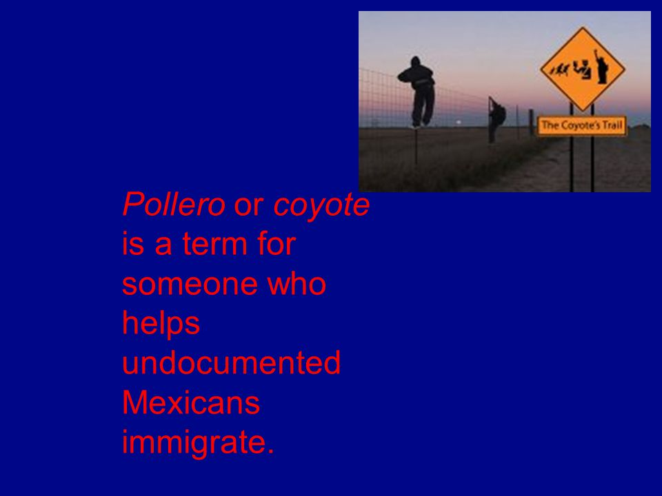 Pollero or coyote is a term for someone who helps undocumented Mexicans immigrate.