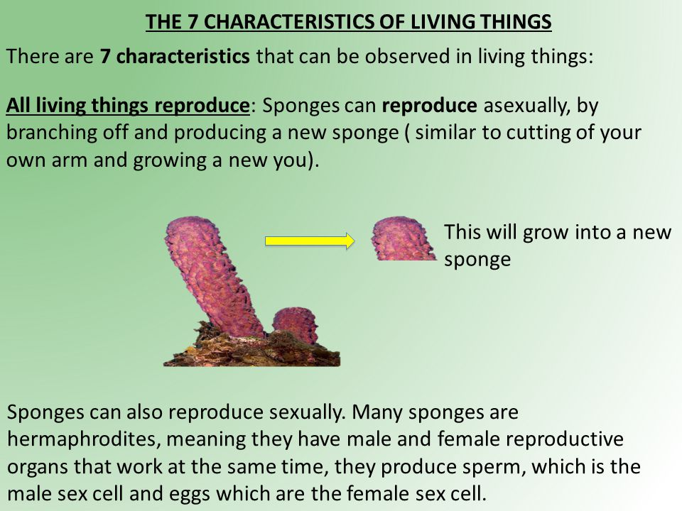 The 7 Characteristics Of Living Things