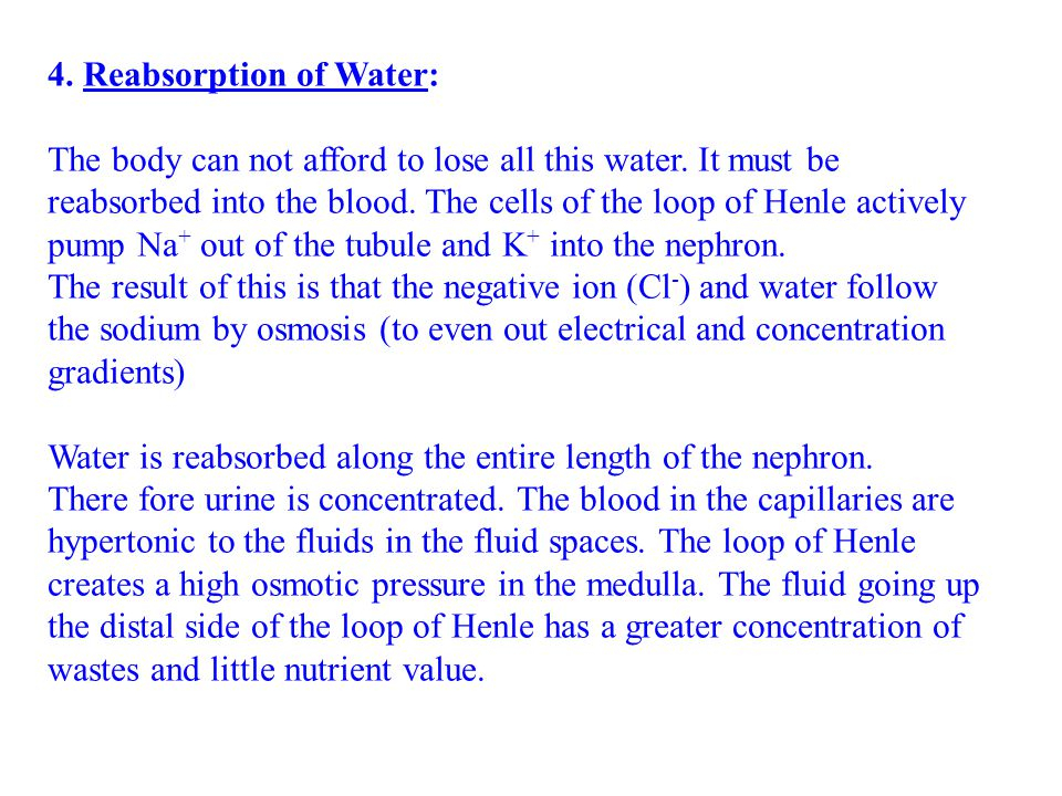 4. Reabsorption of Water:
